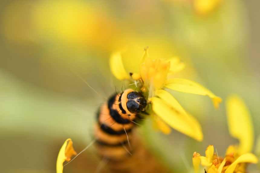 selective focus photography of black and orange caterpillar